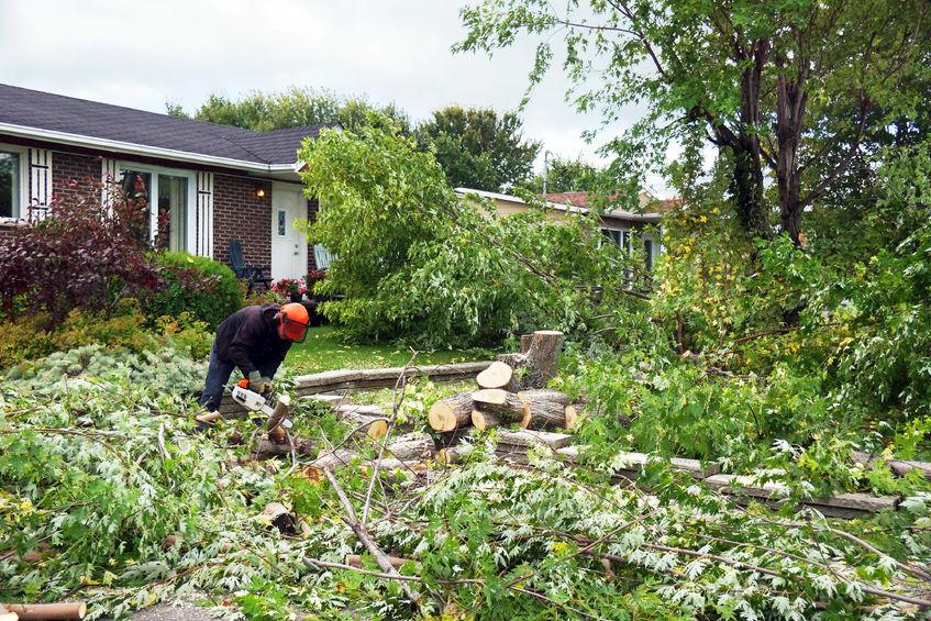 Preislich können Baumfällarbeiten regional unterschiedlich hoch ausfallen.