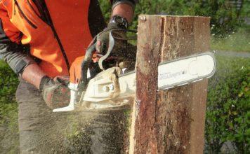 Wie hoch dürfen die Kosten für Baumfällarbeiten ausfallen?